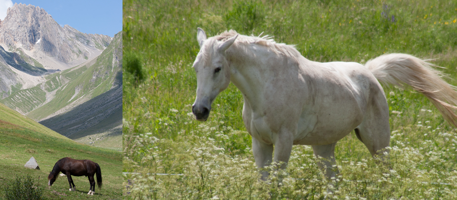 chevaux-7 copie